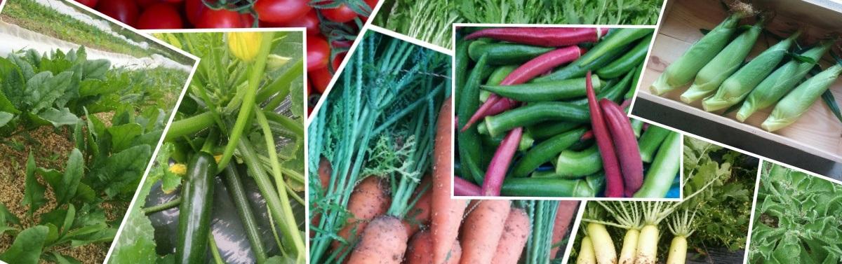 有機無農薬野菜の定期宅配 彩園のら